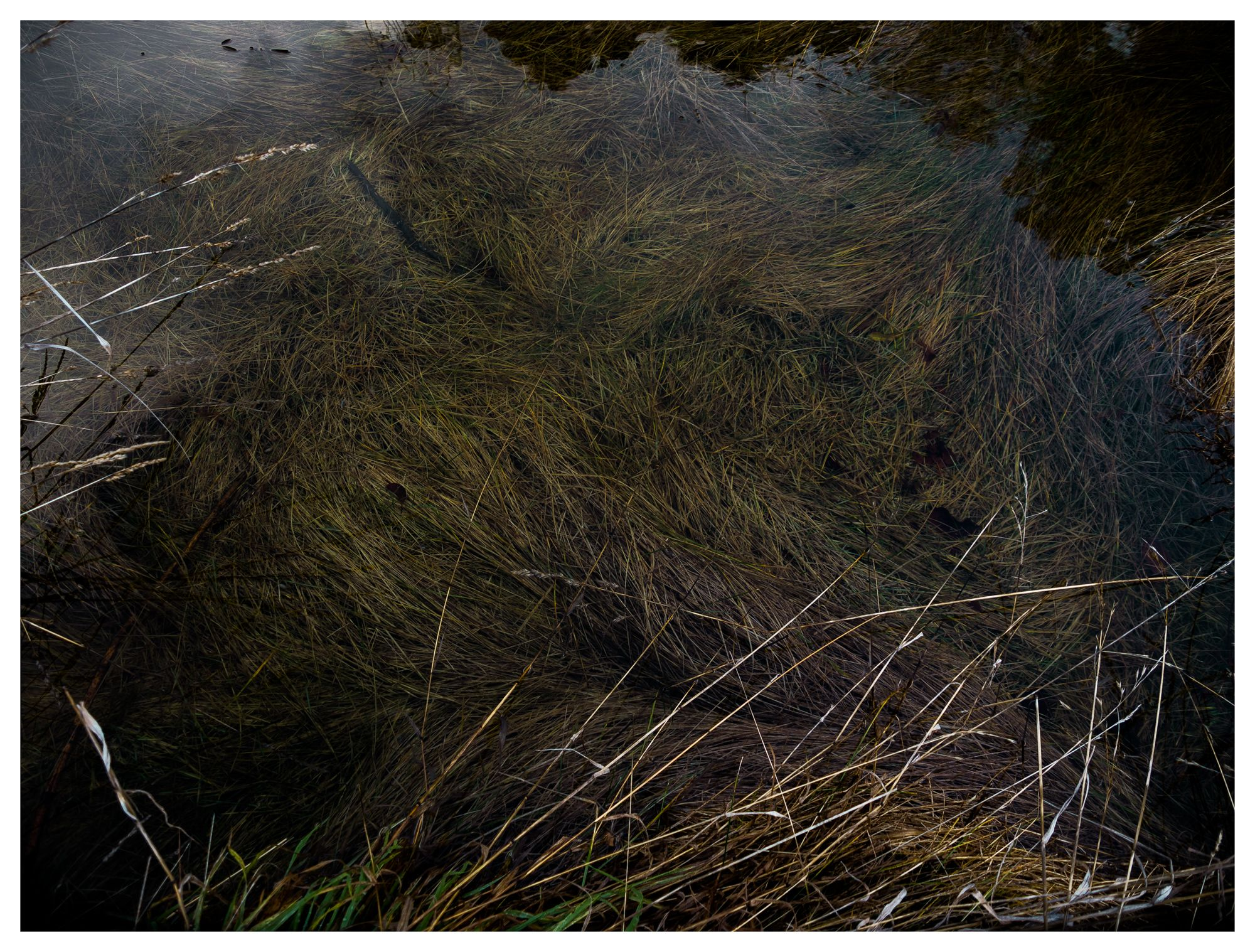 Cañón del Río Azul #16