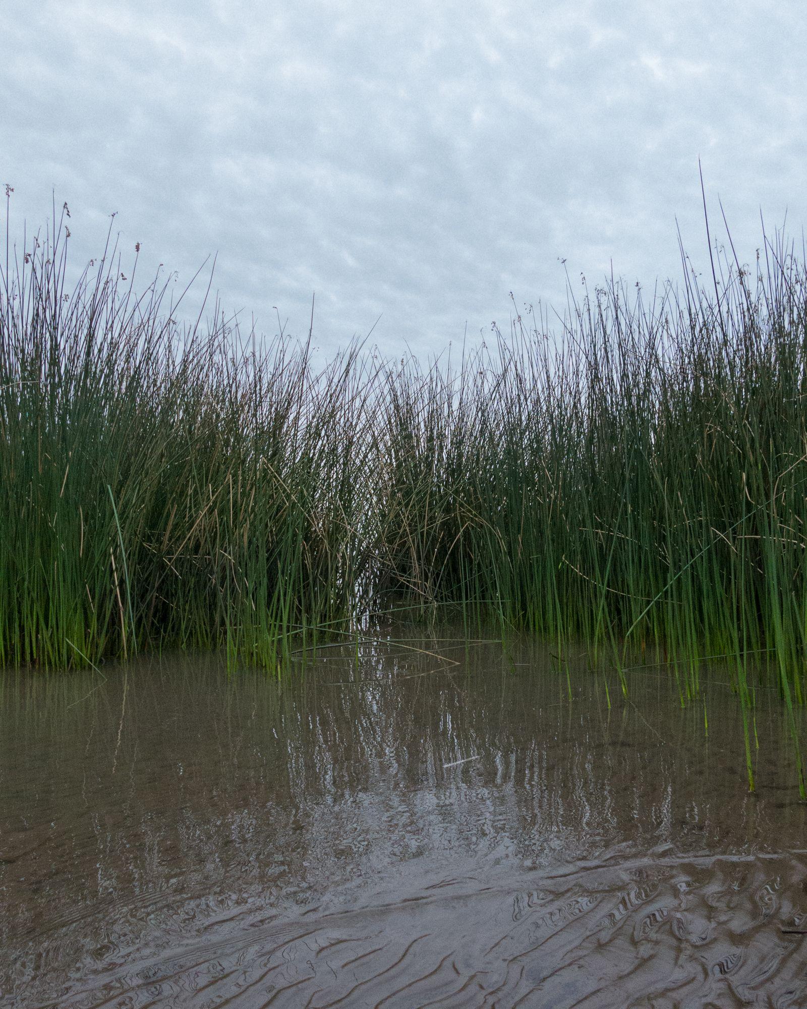 Ribera del Río de la Plata - Parque Natural Rivera Norte #01