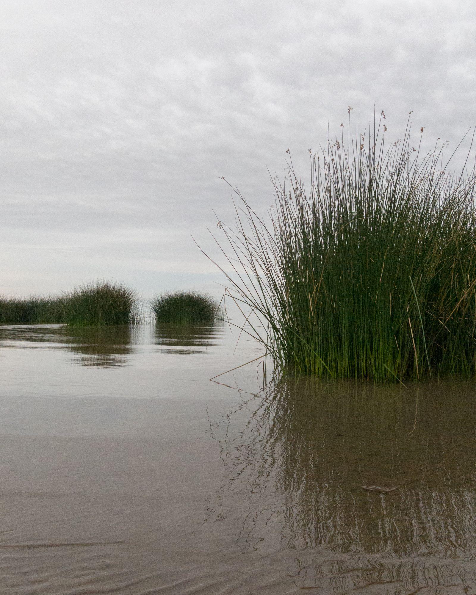 Ribera del Río de la Plata - Parque Natural Rivera Norte #02