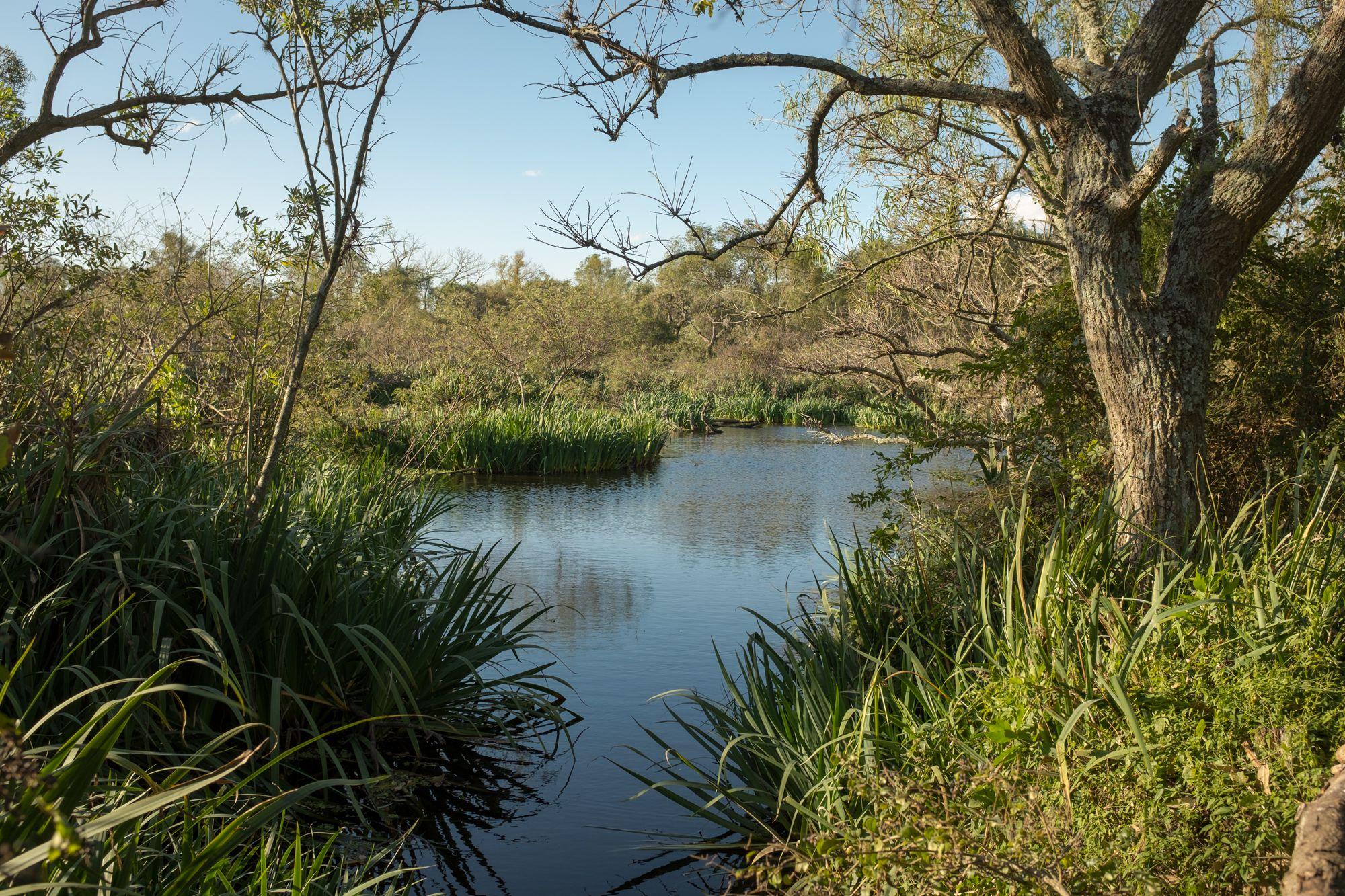 Ribera del Río de la Plata - Parque Natural Rivera Norte #03